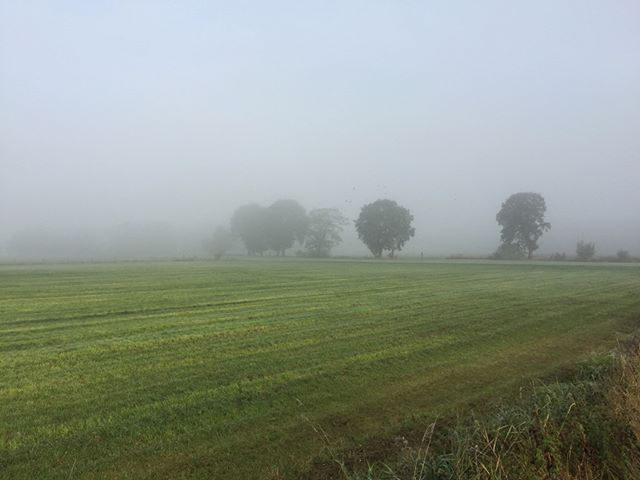 Early morning walk on a foggy day