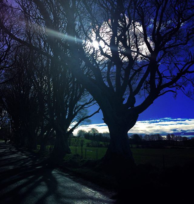 Finally some sunshine after so many rainy days #travelphotography #sun #darkhedges #ireland #irelandphotography