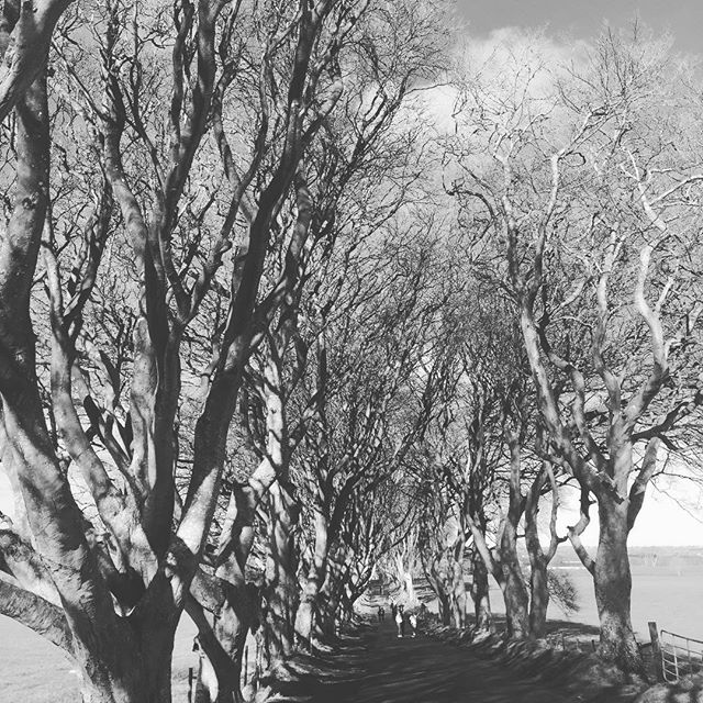 From #gamesofthrones impressive trees in #ireland
